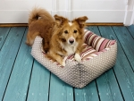 SNOOZE'N'STRIPES - Dog bed, cat bed, stripes and dots